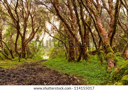 forest with trees in nature and green wood
