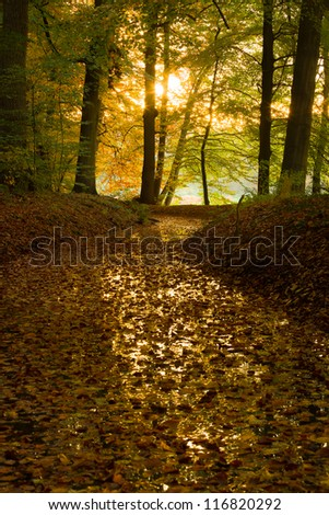Forest with vibrant autumn colors in The Netherlands