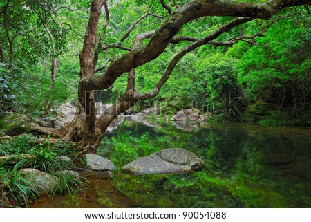 forest with water and tree
