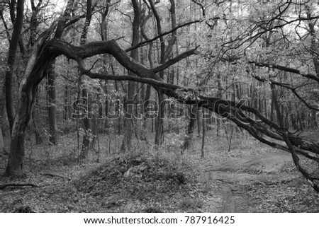 forest wood black and white branch framing crosswise diagonal #787916425