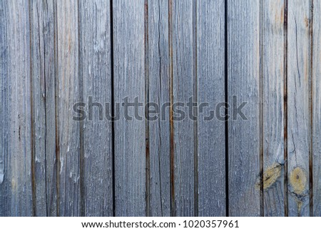 forest wooden background texture