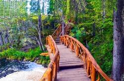 Forest wooden bridge way tree