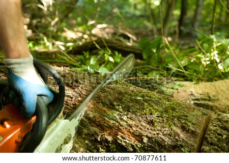 forest worker cutting the trunk in the forest with chainsaw