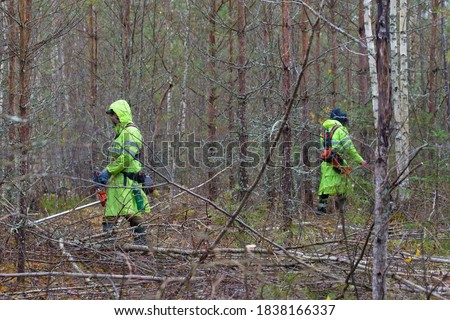 Forest workers in work clothes are working in the forest. Lumberjacks take care of the forest. Forestry and reforestation concept. Stock photo ©