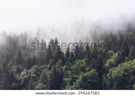 Forested mountain slope in low lying cloud with the evergreen conifers shrouded in mist in a scenic landscape view #294267383