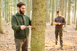 Forester and apprentice measure trunk diameter of tree with the cleat in the forest