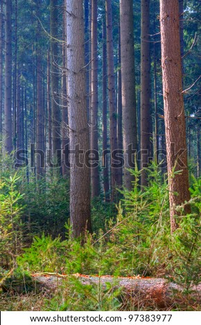 Forestry: Douglas fir, seedlings and a felled tree