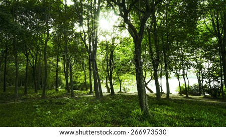 Forests - Shutterstock ID 266973530