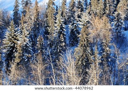 forests in the north saskatchewan river valley, edmonton, alberta, canada