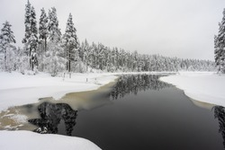 Foresty winter lake or pond in the woods. Trees reflections. Snow covered woods background. Tall trees pines, firs in woods stand under deep layer of snow in winter. Monochrome black and white colors.