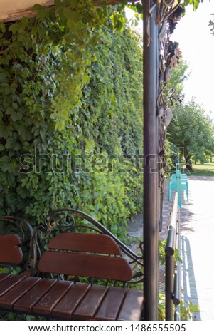 Forged bench and fence on a background of green bushes. Background from green plants. Hedge. Creative vintage background #1486555505