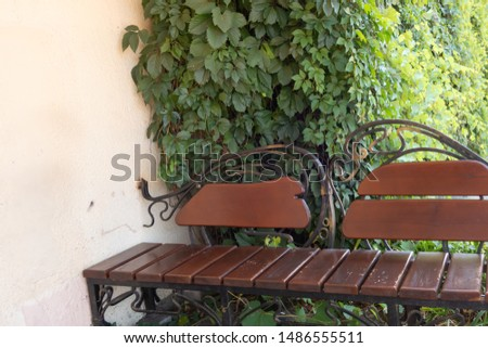 Forged bench and fence on a background of green bushes. Background from green plants. Hedge. Creative vintage background #1486555511