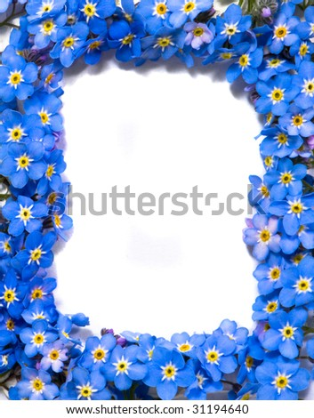 Forget  Flower Picture on Forget Me Not Flowers Frame Stock Photo 31194640   Shutterstock