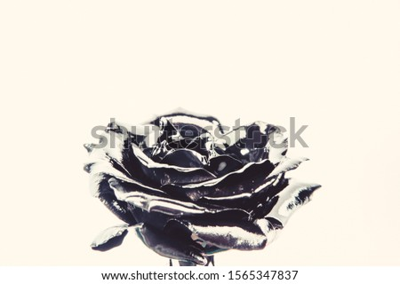 Forging and sculpture. Beautiful black silver flower. Floral shop. Metallic steel color. Flower covered metallic paint close up. Metal flower. Abstract art. Eternal beauty. Botany concept. #1565347837