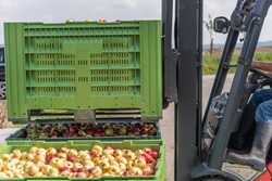 Forklift carries crates of fruit. Apples in container