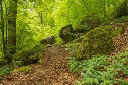 Forrest path at Uracher Wasserfaelle, Bad Urach, Germany