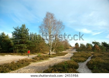 Forrest path with hiker, people on autumn, fall day in belgium. - stock photo