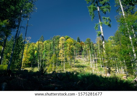 Forrest thinning and blue sky, Bavaria, Germany
