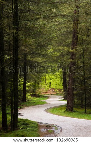 Forrest winding path