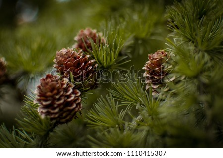 Forrest wood and Pinecone Stock photo ©