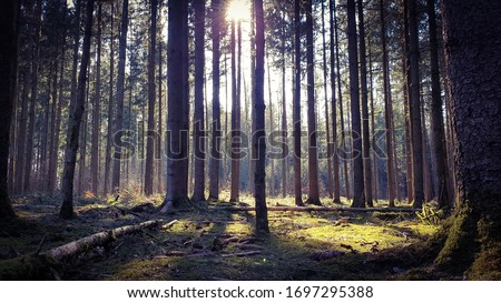 Forrest woods tree and sunlight Foto d'archivio ©