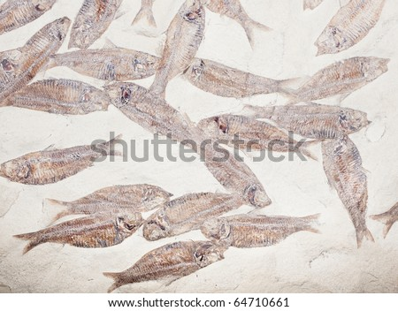 fossil fish background