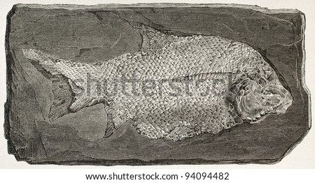 Fossil fish old illustration (Paleoniscum). Created by Mesnel, published on Le Tour du Monde, Paris, 1867