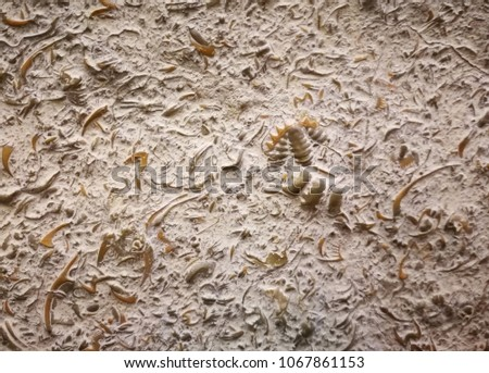 fossil imprint in the sediment #1067861153