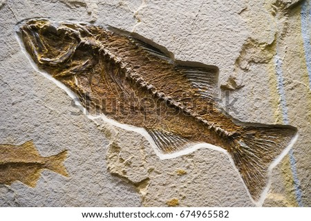 Fossil Of A Ocean Life