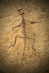 Fossil of a prehistoric creature.