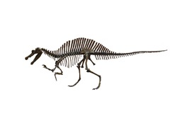 Fossil of dinosaurs