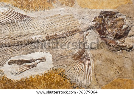 Fossil of prehistoric fish.
