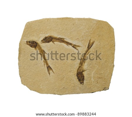 Fossil of 3 small fish. Isolated on white.