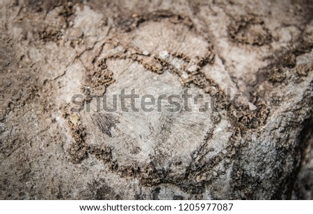 fossil on stone background - fossil snail shells on surface of the stone ammonite prehistoric fossil (Archeology and paleontology)