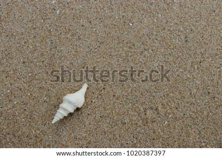 fossil shell on the sand beach, Phuket