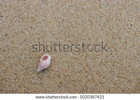 fossil shell on the sand beach, Phuket