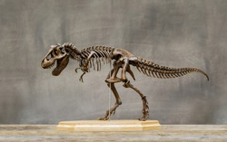 Fossil skeleton of Dinosaur king Tyrannosaurus Rex ( t-rex ) on wooden base and blackboard background retro vintage style.