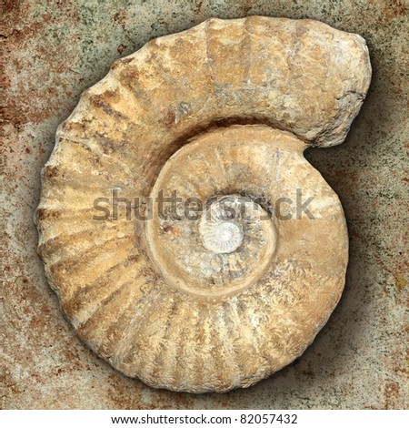 fossil spiral snail stone real ancient petrified shell over limestone [Photo Illustration]