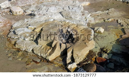 Fossil Tree Trunk at Reids Mistake. New South Wales Australia. Trees were destroyed during a volcanic eruption and fossilised Stockfoto ©