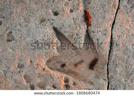 Fossilised dinosaur footprint at Reddell Beach in Broome, Western Australia, Australia. Stockfoto ©