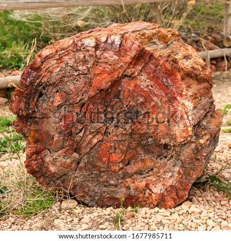 Fossilised tree trunk in Utah, USA. The wood has turned to stone over milennia. Stockfoto ©