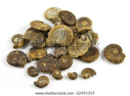 Fossilized ammonites isolated on a white background