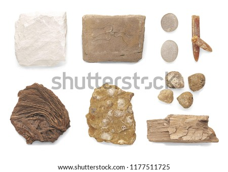 Fossilized brittle star, Pebbles, Fossilized crinoids, Fossilized internal\rshells, Chalk, Solid mud, Fossilized shells and Limestone pebbles isolated on white background.