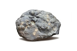 Fossilized remains of molluscs in sedimentary rock. Fossil invertebrate molluscs.