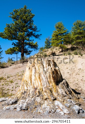 Fossilized Trunk at Florissant Fossil Beds National Monument