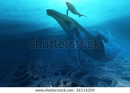 FOSSILS - A Humpback mother cow with her twin baby calves.
