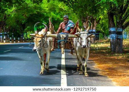 Found a farmer on his bullock cart, Tamil Nadu - Kerala Border, India Zdjęcia stock ©