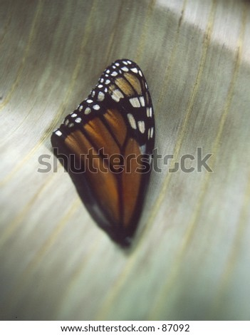 Found butterfly wing on natural fiber background.
