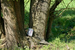found geocaching hiding place with a cache in a box in a tree in the Herrenkrugpark near Magdeburg in Germany