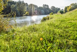 Fountain grass field on a riverbank in Italy